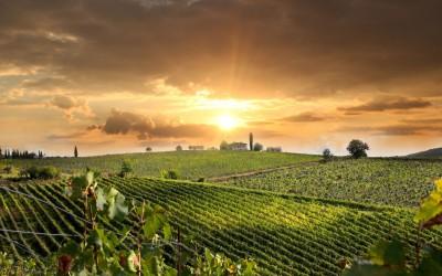 Heiraten im Weinbaugebiet Valpolicella